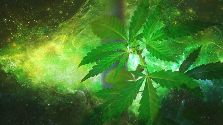 Lecznicza marihuana - gdzie jest legalna?